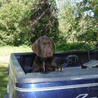 Julie-dog